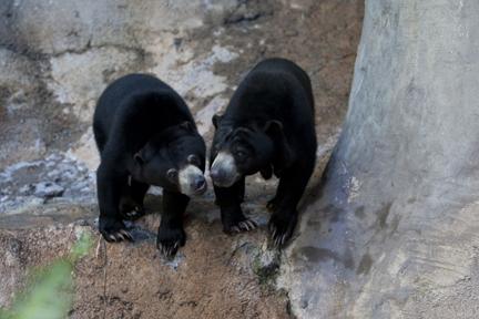 San Diego Zoo Safari Park        Photos  amp       Reviews   Zoos     Yelp