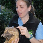 Our next special guest is Cocoa, a southern three-banded armadillo. Her eye peeps out at the camera, but in actuality she relies much more heavily on her sense of smell; southern three-banded armadillos can smell a worm that's eight inches underground and her shovel-like front feet make it easy for her to dig one up!