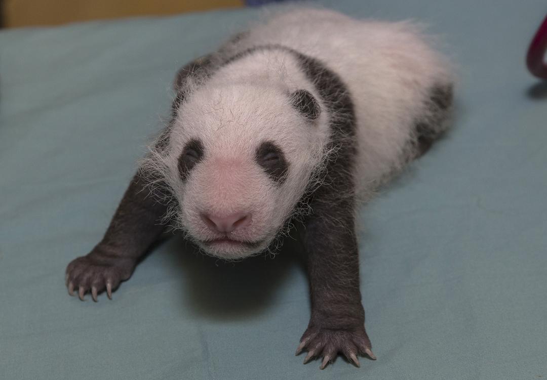 Image Result For Newborn Polar Bear