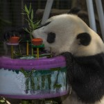 Yun Zi's done a lot of growing since he's 3rd birthday.