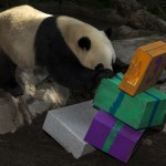 Just wait until Yun Zi sees his newest gift from panda fans!