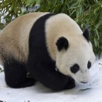 Yun Zi was 2 when he saw his first snow.