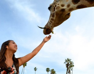It is not very hard to feed giraffes considering their tongues are eighteen to twenty inches long! Intern Jade, or rather our modern day Pocahontas, enjoys her experience with the giraffes ⎯ what a fun way to finish up the day!