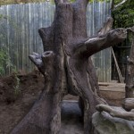 "Yun Zi's new ""tree"""