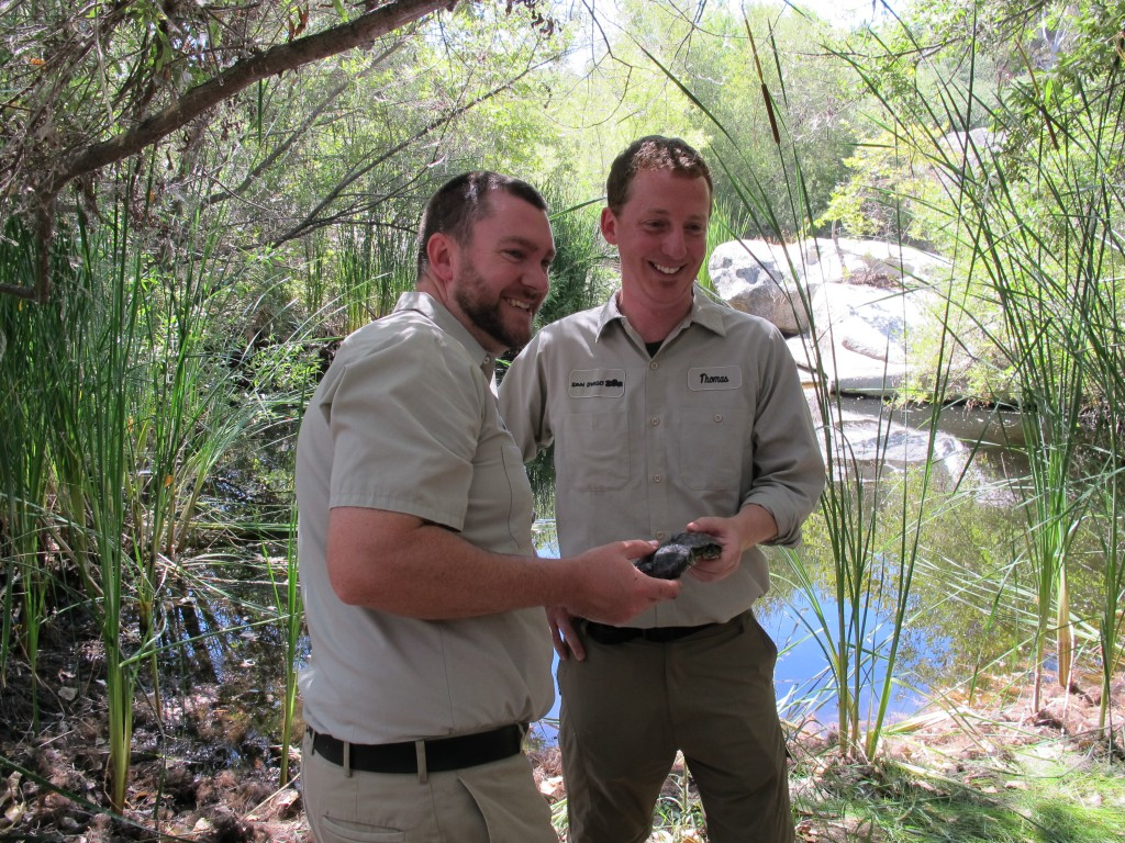 Brandon Scott (L) and Thomas Owens, reptiles keepers at the San Diego Zoo proudly hold their headstarted turtles. (Photo by the author)