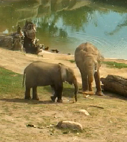 Two of our elephants spend a relaxing afternoon at the Safari Park.
