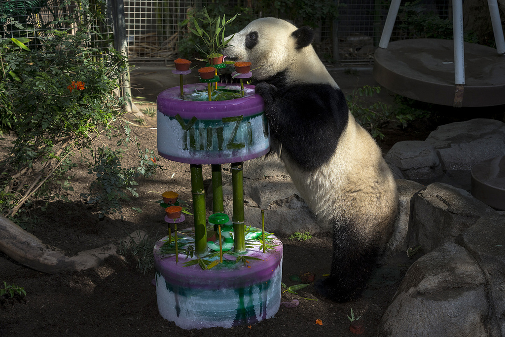 Yun Zi enjoys his cake at his third birthday party last summer.