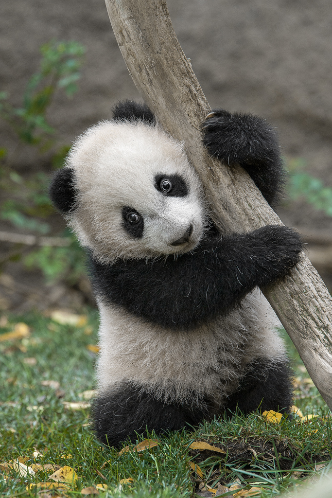 Yun Zi when he was a wee cub