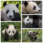 Yun Zi over the years
