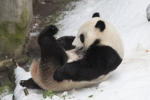 Yun Zi slides into the hearts of his many admirers!