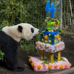 Yun Zi's birthday cake didn't stay this way for long!