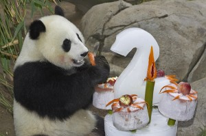 Mei Sheng celebrated his 2nd birthday in 2005.