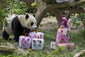 Zhen Zhen inspects her 3rd birthday cake.