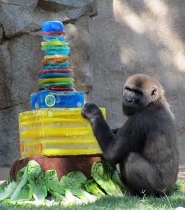 Gorilla Frank 5