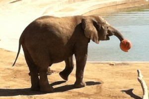 Emanti prepares to dunk his pumpkin.