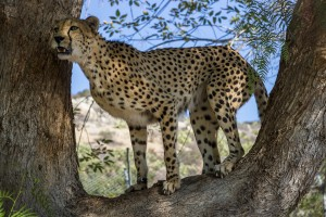 Photo taken on Dec. 3, 2013, by Ken Bohn, San Diego Zoo.