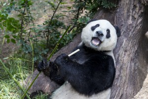 Yun Zi is in perfect health!