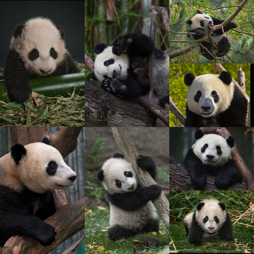 Yun Zi Throughout the Years