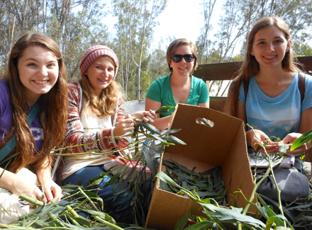 (From left to right) Interns Samantha, Emily, Libby, and Tori are peeling acacia leaves off of their branches to feed to some animals unbeknownst to us. As we soon discovered, removing leaves from a tree is much easier if you are a giraffe. The sweet, sappy smell of the leaves wafted through the air of the Safari Park as we traveled towards our destination, the open fields.