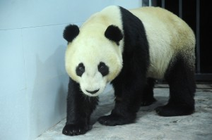 Yun Zi arrives in the quarantine area.