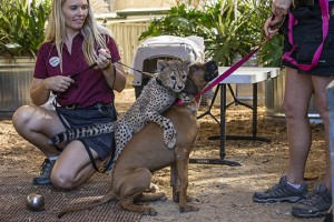 Cheetah Ruuxa, Dog Raina