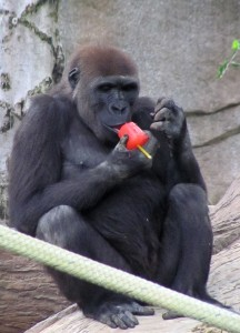 Frank enjoys one of his birthday popsicles.