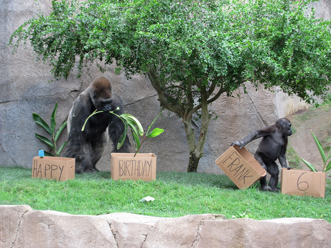 Birthday Gift Baskets In San Diego : Tag archives san diego zoo safari park page