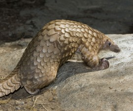 9 Animals You Never Knew Existed