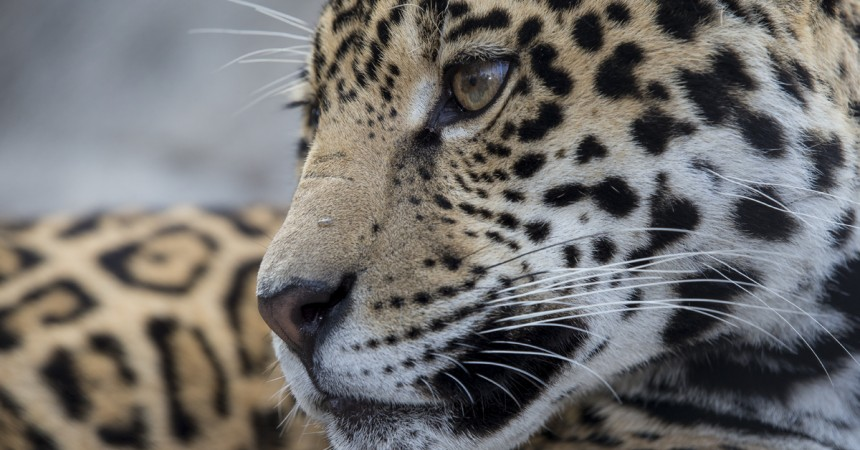 9 Animal Superstitions You Shouldn't Believe