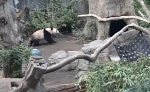 Xiao Liwu takes a stroll.