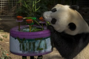 Do you remember when Yun Zi turned 3?