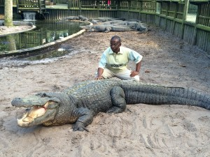 The Abidjan Zoo's director poses with a large male alligator at the St. Augustine Alligator Farm.