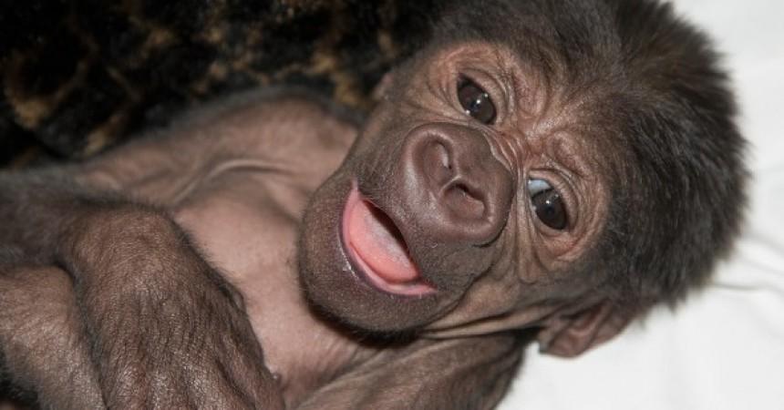 14 Notable Safari Park Births of 2014: Joanne