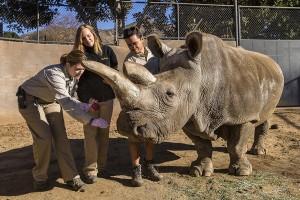 Rhino Exam