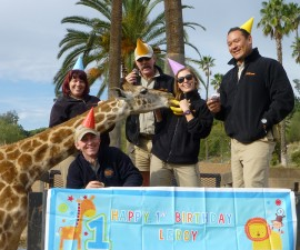 Safari Park keepers created a special celebration for a special giraffe.