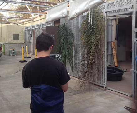 My fellow intern, Mark, observes two animal quarantines at the veterinary department. When animals arrive at the Zoo, they must first be quarantined for thirty days. This is done in order to examine them for potential diseases or viruses.