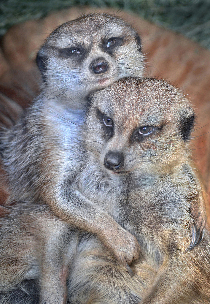 Photo by Ion Moe