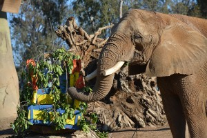 "Shaba celebrated her birthday with a specially made ""cake."""