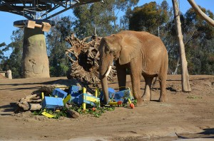 Shaba demonstrates that one CAN have her cake and eat it, too!