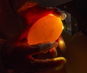 Holding an egg up to a warm light, a process called candeling, gives a glimpse inside an egg to see if it is fertilized and developing properly