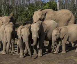 Safari Park herd