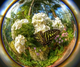Best overall photo | Butterfly Jungle Instameet Recap