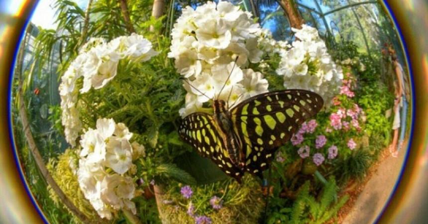 Best overall photo | Butterfly Jungle Instameet Recap