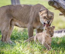 13 Animals Grumpier Than Grumpy Cat