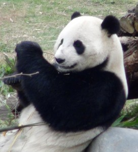 Yun Zi is thriving in his new home.