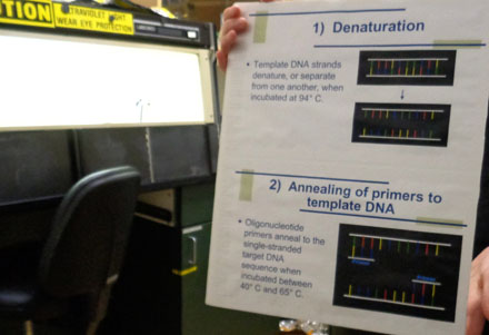 This is an example of when a specific DNA sequence is copied. After a DNA sample is extracted in the DNA extraction room, it is then sent to the PCR lab for DNA and RNA replication to amplify the selected region. The selected region is amplified when a geneticist is studying a specific part of a DNA of an animal. By isolating the specific region of the DNA or RNA sample and forcing it to replicate itself billions of times over, a geneticist can study pathogens or diseases that affect a specific part of the DNA or RNA.