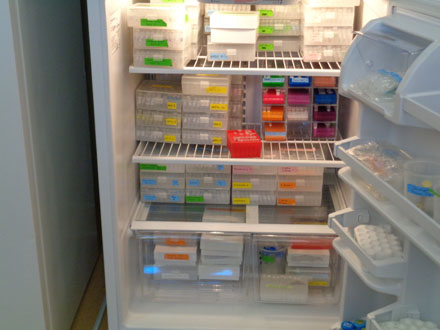 This is the DNA fridge in the genetics lab. Different types of animal DNA are stored in this fridge because the cold temperature keeps the DNA from breaking apart. Some of the samples kept in this fridge are over 50 years old! Some of the samples of animal DNA kept in the fridge include reptiles, birds, mammals, and even some endangered species. These samples can be taken and used for things like sexing animals, checking hormone rates, and even determining if an animal has a genetic disease.