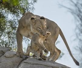 11 Incredibly Awesome Animal Moms