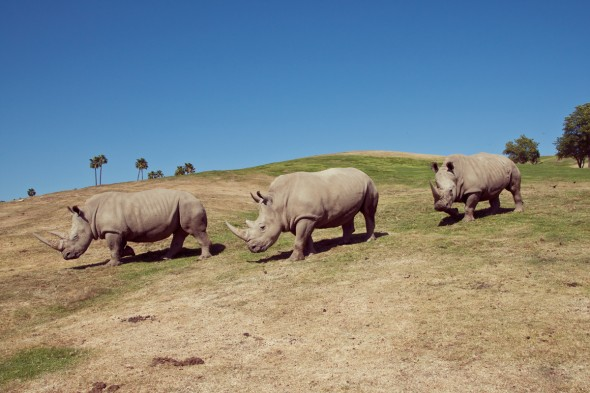 25 Rhino Facts You Should Know