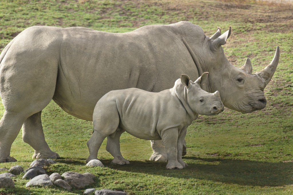 Together we can kill the myths that are responsible for the decline of rhinos.